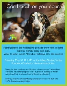 Fostering animals at Charleston Shelter 101 workshop flyer