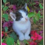 Kitty playing in the flowers