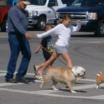 children walking their bulldog in West Virginia crosswalk