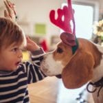 Free Dogs for Christmas from West Law Firm and KCHA