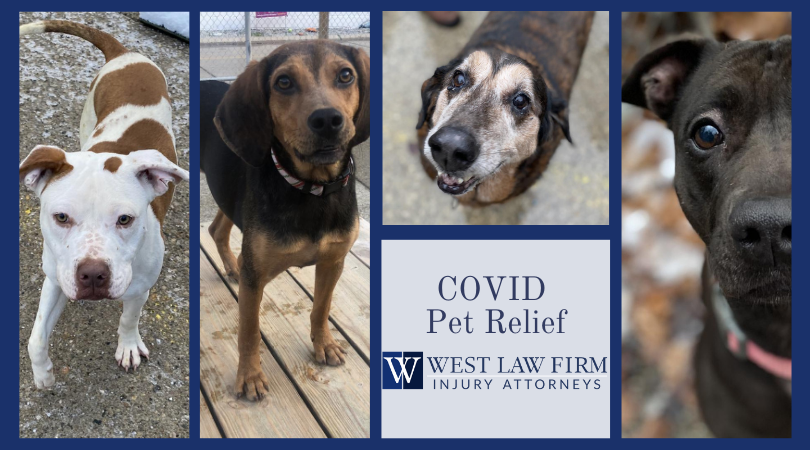 Pictures of dogs sponsored by West Law Firm in Charleston WV